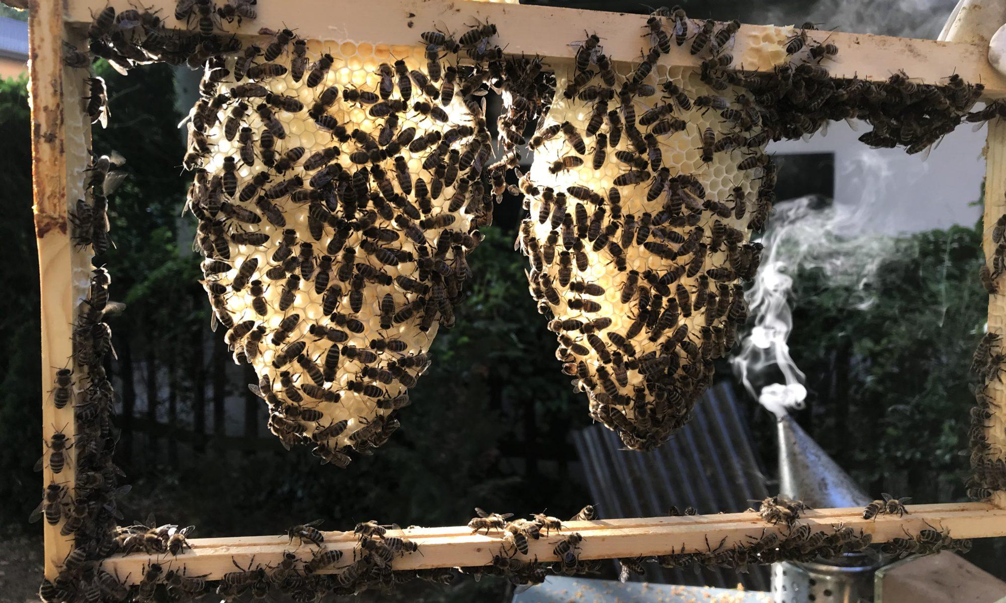 Bild von Honigbienen